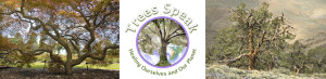 Website logo with trees